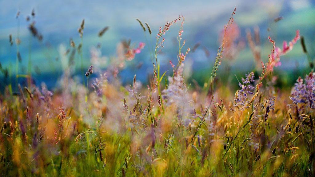 Ukwiecona łąka