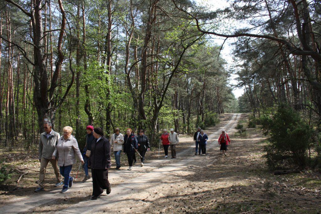 las, piaszczysta ścieżka, osoby z białymi laskami