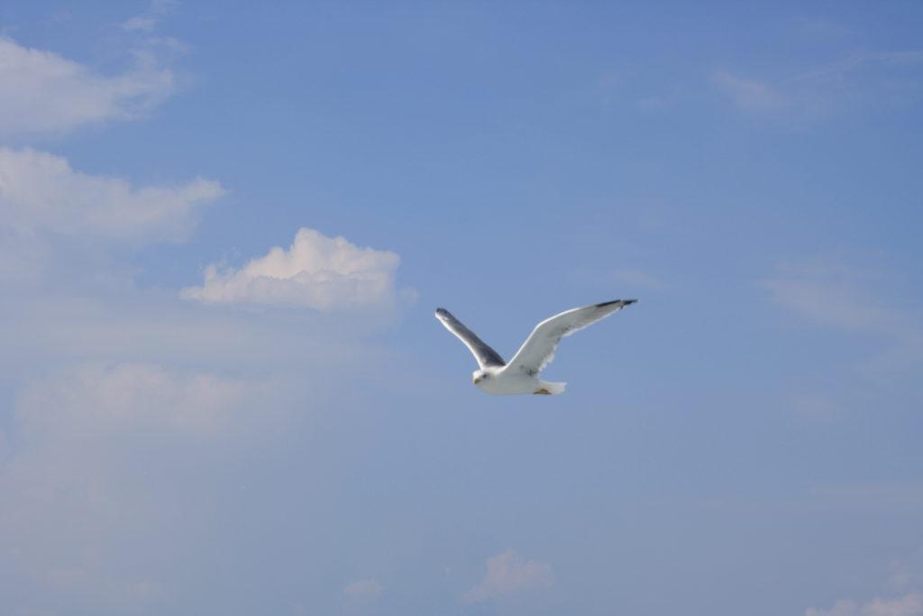 Na błękitnym niebie z białymi chmurkami lecąca mewa.