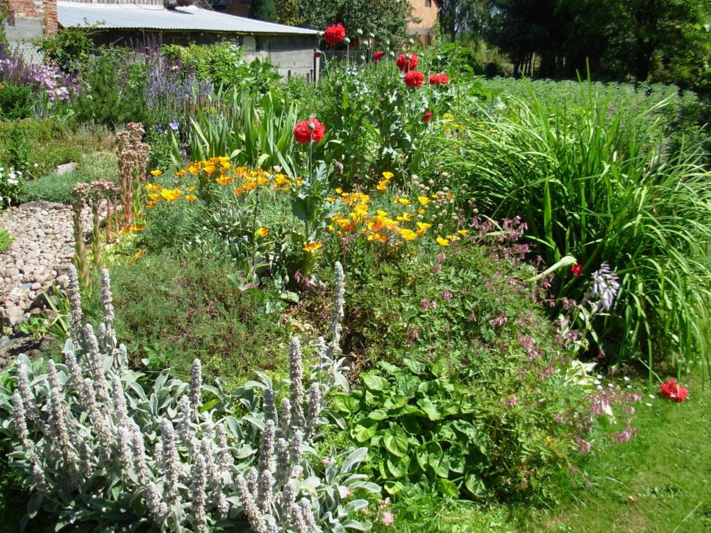 fragment ogrodu z ziołami i kwiatami
